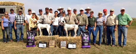 2013 national amateur pheasant championship runner up houstons blue diamond