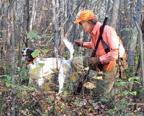 Ken, owner of Northwoods Aerosmith (Blue Shaquille x Houston's Belle's Choice, 2011) on a grouse hunt in Minnesota.