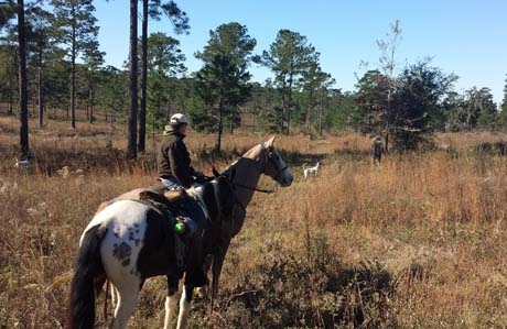 The year has come full circle; Betsy and I are back in southwest Georgia for the winter. We brought several client dogs and all our own puppies to train on bobwhite quail. One morning in December, I was invited on a hunt on the private Sunny Hill plantation. It was thrilling to see such good bird work by several of their well-trained pointers.