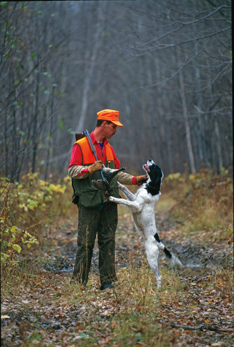 Jerry and his first English setter Charlie (Spring Garden Tollway, 1986 - 2001) hunt in the north woods of Minnesota. Photo by Dale C. Spartas.