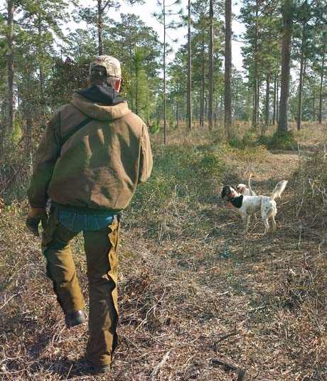 On the Disston Plantation, young Axel (Northwoods Blue Ox x Northwoods Chablis, 2012) backs an experienced pointer.