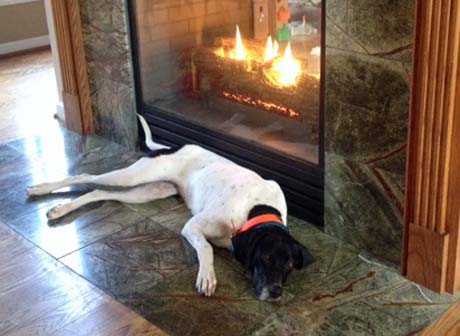 """Meanwhile back in Michigan, """"Scout (Elhew G Force x Northwoods Vixen, 2013) knows where to spend  this brutally cold winter,"""" according to her owner Jeremy."""