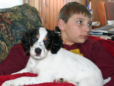 Boreas, our name for the male puppy out of Northwoods Blue Ox x Northwoods Chablis, went to his new home with the very nice Wiedmann family. He looks pretty comfy on the lap of one of the Wiedmann sons as he watches a Gopher hockey game.
