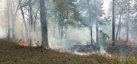 Land management of quail plantations is big business in southwestern Georgia…and a key component is fire. On one of our last days, plantation manager Matt burned an 80-acre piece.