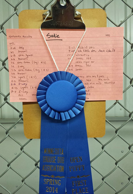 The kennel run of Northwoods Sadie (CH Houston's Blackjack x Northwoods Chablis, 2013) is suitably decorated after her first place win in the Open Puppy.