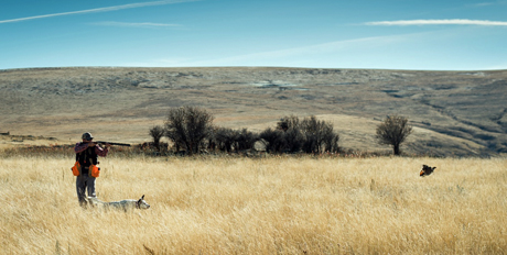 The hunter aims at a sharp-tailed grouse pointed by Mocha.