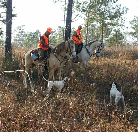 Jerry with Penny (CH Elhew G Force x Northwoods Vixen, 2013), on the left, and dog trainer Bobby Ryan with his pointer prepare to start the afternoon brace on Pinehaven Plantation.