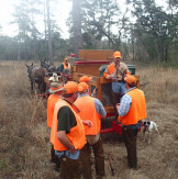 Between morning braces of a quail hunt on Pineaven Plantation, Jerry explains the intricacies of Garmin collars with a group of hunters. A matched pair of mules is hitched to the wooden dog wagon where a Labrador waits up front and bird dogs rest in the boxes.