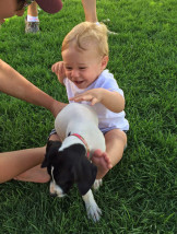 Just wanted to say thank you again and let you know our puppy is doing great already. Attached is a photo of our little guy Jack with the puppy. She has been adjusting wonderfully, although we know this is just the beginning :)  ~ Karrli and Caleb