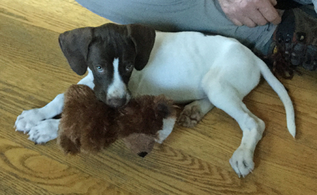 The puppy is great. We had absolutely no problems at the hotels or on the very long ride home. We decided on the name Coop. Thank you so much. ~ Tim, Massachusetts